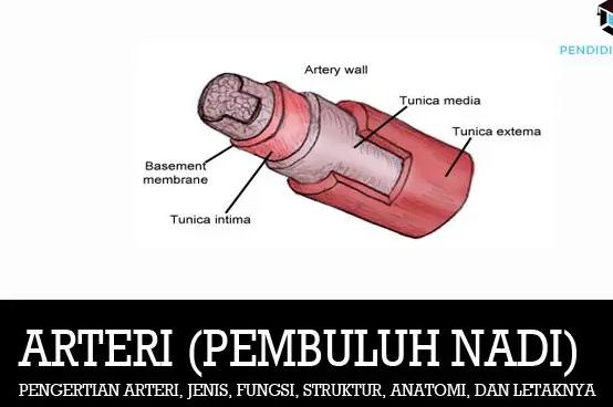 pengertian-arteri